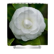 White Camellia Shower Curtain by Rich Franco