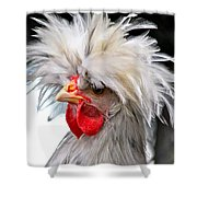 White Crested Blue Polish Cockerel Shower Curtain by Karon Melillo DeVega