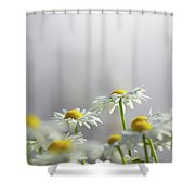 White Daisies Shower Curtain by Carlos Caetano