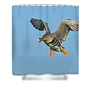 White-fronted Goose Anser Albifrons Shower Curtain by Winfried Wisniewski