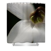White Graceful Shower Curtain by Mike Reid