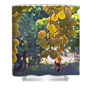 White Grapes Shower Curtain by Barbara McMahon