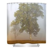 White Gum Dawn Shower Curtain by Mike  Dawson