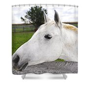 White Horse Shower Curtain by Elena Elisseeva