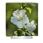White Rose Of Sharon Shower Curtain by Teresa Mucha