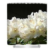 White Sunlit Floral Art Prints Rhododendron Flowers Shower Curtain by Baslee Troutman