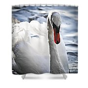 White Swan Shower Curtain by Elena Elisseeva