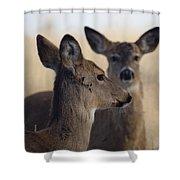 Whitetail Deer Shower Curtain by Ernie Echols