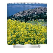 Wild Mustard Shower Curtain by James Steinberg and Photo Researchers