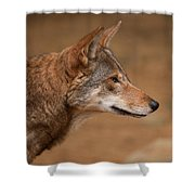 Wile E Coyote Shower Curtain by Karol  Livote
