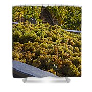 Wine Harvest Shower Curtain by Garry Gay