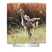Winging It In The Morning Shower Curtain by Carol Groenen