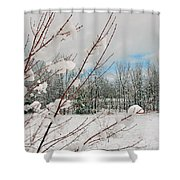 Winter Woods Shower Curtain by Joann Vitali