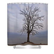 Wintertree Shower Curtain by Joana Kruse