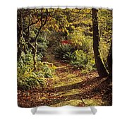 Woodland Path, Mount Stewart, Ards Shower Curtain by The Irish Image Collection