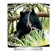 Young Black Bear Shower Curtain by Will Borden