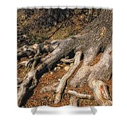 Your Roots Are Showing Shower Curtain by Donna Blackhall