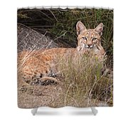 Bobcat At Rest Shower Curtain by Alan Toepfer