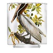 Audubon: Pelican Shower Curtain by Granger