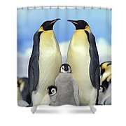 Emperor Penguin Aptenodytes Forsteri Shower Curtain by Konrad Wothe