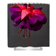 Fuchsia Shower Curtain by Dawn OConnor