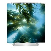 Giant Kelp Forest Shower Curtain by Dave Fleetham - Printscapes