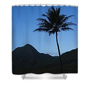 Palm And Blue Sky Shower Curtain by Dana Edmunds - Printscapes