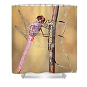 Red Dragonfly Portrait Shower Curtain by Carol Groenen