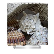 Seashells Shower Curtain by Frank Tschakert