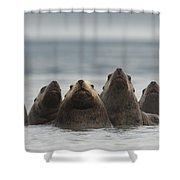 Stellers Sea Lion Eumetopias Jubatus Shower Curtain by Michael Quinton