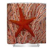 Thailand, Marine Life Shower Curtain by Dave Fleetham - Printscapes
