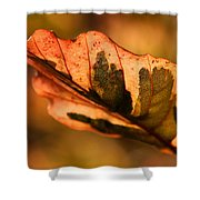 Tri-color Beech In Autumn Shower Curtain by Angela Rath