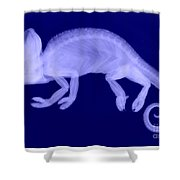 Veiled Chameleon X-ray Shower Curtain by Ted Kinsman
