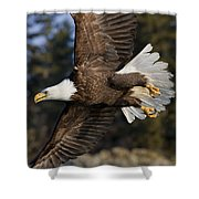 Bald Eagle Shower Curtain by John Hyde - Printscapes