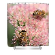 2 Bees Shower Curtain by Angela Rath