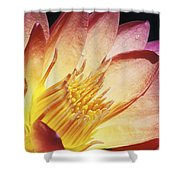 Pink Water Lily Shower Curtain by Bill Brennan - Printscapes