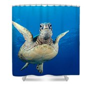 Green Sea Turtle Shower Curtain by Dave Fleetham - Printscapes