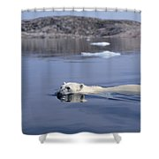 Polar Bear Swimming Wager Bay Canada Shower Curtain by Flip Nicklin