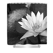 Water Lily Shower Curtain by Bill Brennan - Printscapes