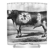 Cattle, 19th Century Shower Curtain by Granger