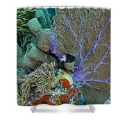 A Bi-color Damselfish Amongst The Coral Shower Curtain by Terry Moore