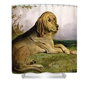 A Bloodhound in a Landscape Shower Curtain by English school