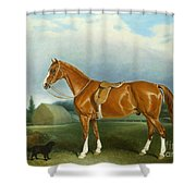 A Chestnut Hunter And A Spaniel By Farm Buildings  Shower Curtain by John E Ferneley