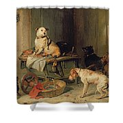 A Jack In Office Shower Curtain by Sir Edwin Landseer