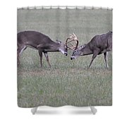 A Little Dispute Shower Curtain by Todd Hostetter