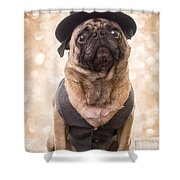 A Star Is Born - Dog Groom Shower Curtain by Edward Fielding