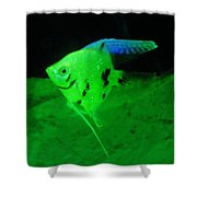 A Yellow Fish  Shower Curtain by Jeff Swan