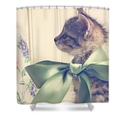 All Dressed Up Shower Curtain by Amy Tyler