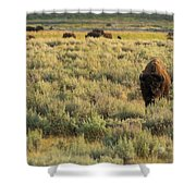 American Bison Shower Curtain by Sebastian Musial