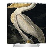 American White Pelican Shower Curtain by John James Audubon
